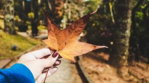 Outono em Campos do Jordão