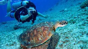 Onde mergulhar no Rio de Janeiro?